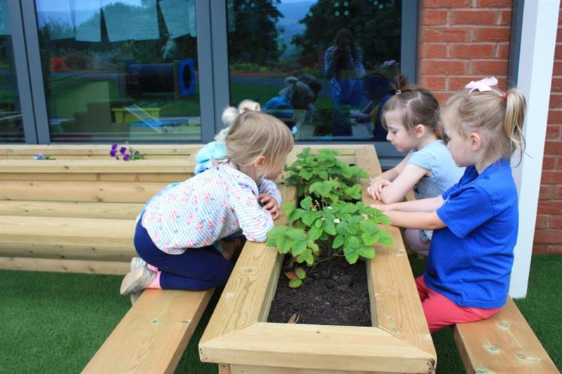 Planters for Schools